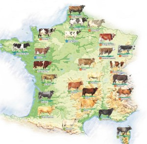 France18 cows regions