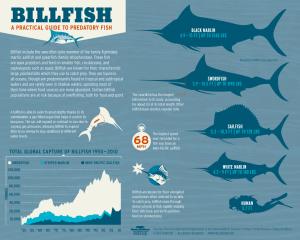 Seafood12 swordfish infographic